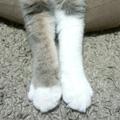不揃いの靴下
