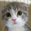 猫ブログはじめました。