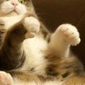 ろくろを回す猫